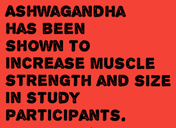 ashwagandha for bodybuilding infographic